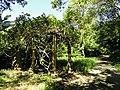 San Juan Botanical Garden - DSC06998.JPG