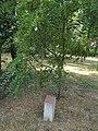Sankt Augustin (Germany) plaque, Széchenyi Park, 2019 Szentes.jpg