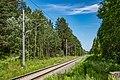 Sciklieva reserve (Belarus, June 2020) 11.jpg