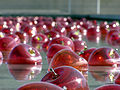 Sculptured Red Apples in Water.jpg