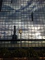 Seagull Reflection (186289675).jpeg