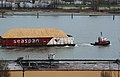 Seaspan tug towing seaspan barges full of sawdust -b.jpg