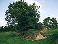 Secondary mounds, Fourknocks.jpg