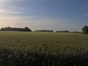 Humid Pampas - Barley field in Buenos Aires Province.