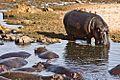 Serengeti, Tanzania - panoramio (14).jpg
