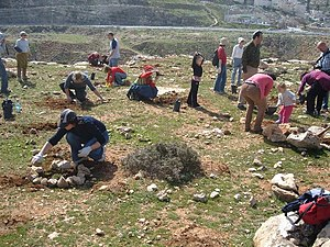 Planting trees at Shaar ha-Mizrach