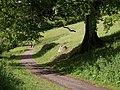 Sharpham Drive - geograph.org.uk - 454308.jpg