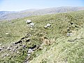 Sheep on the side of a tributary valley - geograph.org.uk - 426810.jpg