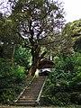 Shiba-jinjya(Yosano)本殿階段.jpg