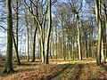 Shotridge Wood - geograph.org.uk - 682209.jpg