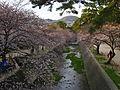 Shukugawa during hanami season.jpg