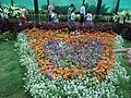 Snap from Lalbagh Flower Show Aug 2013 8373.JPG