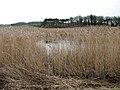 Snipe Marsh - geograph.org.uk - 1180314.jpg