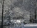 Snow - panoramio (14).jpg