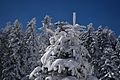 Snowy Tree 27-1-2017.jpg