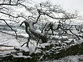 Snowy tree (2235876535).jpg