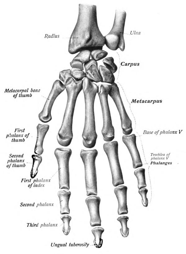 Thumb Wikiwand