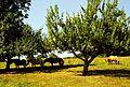 Sommer im Moosalbtal - panoramio (1).jpg