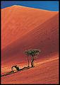 Sossusvlei namib desert.jpg