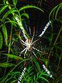 Spider 20161130 191138-01.jpg