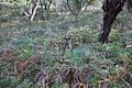 Spot the Wallaby.jpg