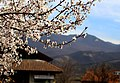 Spring in Mtskheta.jpg