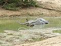 Sri Lanka Photo167.jpg