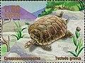 Stamp of Abkhazia - 1999 - Colnect 1003148 - Testudo graeca.jpeg