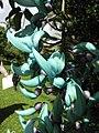 Starr-110330-3821-Strongylodon macrobotrys-flowers-Garden of Eden Keanae-Maui (24453919123).jpg