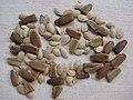 Starr-120504-5567-Cucurbita pepo var ovifera-seeds-Olinda-Maui (24774581199).jpg