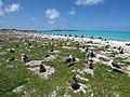 Starr-150328-0912-Coronopus didymus-Black Footed and Laysan Albatrosses-Northeast Coast Eastern Island-Midway Atoll (25243178416).jpg