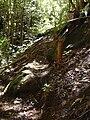 Starr 040912-0034 Psidium cattleianum.jpg