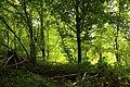 Steenbergse bossen 15.jpg