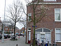 Streetcorner with magnolia - tulip-tree - on the Zeeburgerdijk, Amsterdam.jpg