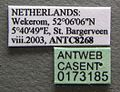 Strongylognathus testaceus casent0173185 label 1.jpg