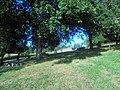 Suegoscampo.jpg