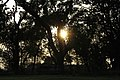 Sun obscured by trees in unidentified Indian forest, 2016.jpg