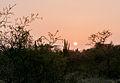 Sunset in Margarita xerophytic 2.jpg