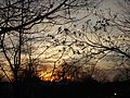 Sunset in NJ through trees in Summit.JPG