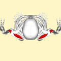 Supraspinatus muscle top.png