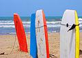 Surf (251190584).jpg