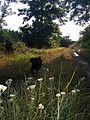 Tüskevár - panoramio.jpg