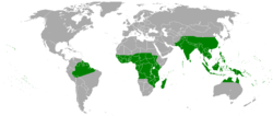 Tacca Distribution.PNG