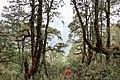 Taktsang Heritage Forest, Bhutan.jpg