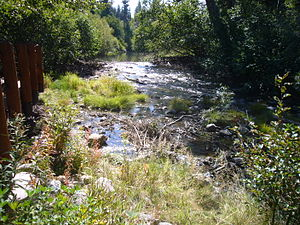 Taylor Creek (Lake Tahoe) - Image: Taylor Creek with beaver dam mostly removed AFTER 2012 09 28