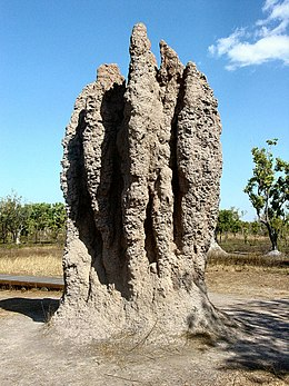"A termite ""cathedral"" mound produced by a termite colony: a classic example of emergence in nature."