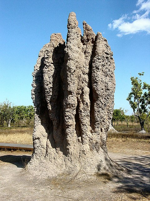 "A termite ""cathedral"" mound produced by a termite colony offers a classic example of emergence in nature"