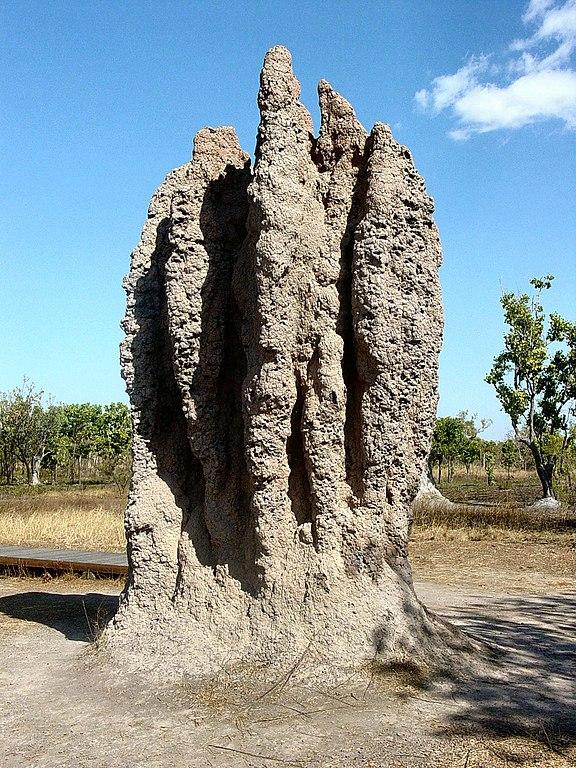 termitiště
