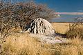 Termite mound (3688074852).jpg