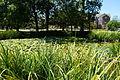 Texas Woman's University September 2015 46 (lily pond).jpg